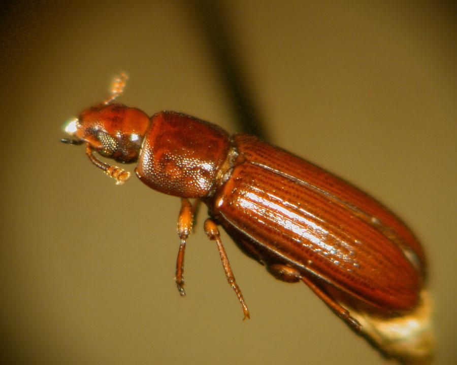 Exterminators The Beetle Bomb Stomp Em Out