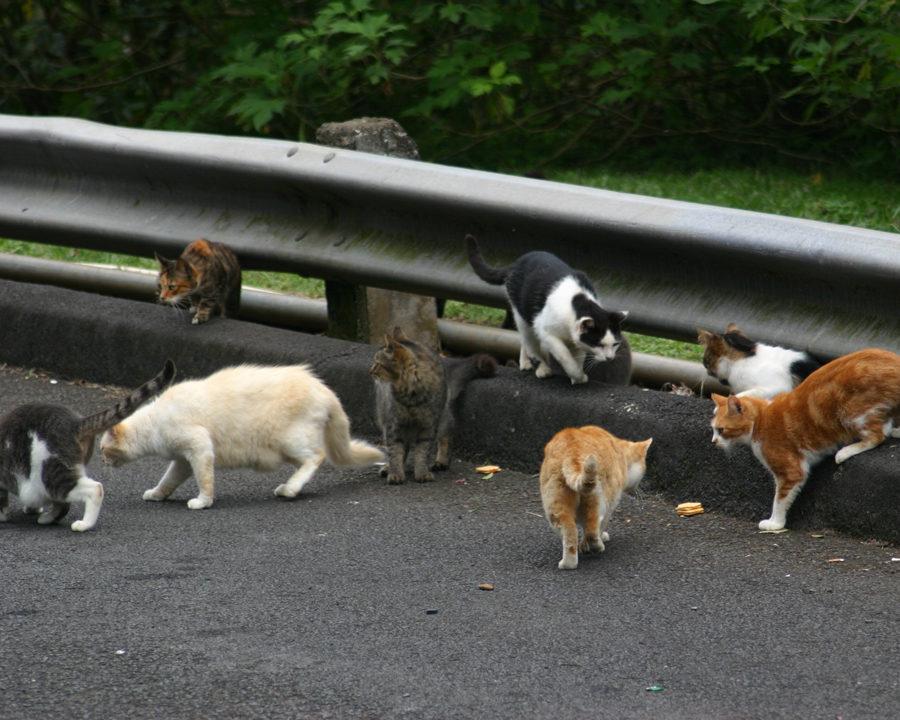 feral cat, feral cats, cat, cats, town and country, town and country pest solutions, pest, pests, rochester, syracuse, buffalo, rochester ny, syracuse ny, buffalo ny, new york, western ny, rochester exterminators, syracuse exterminators, buffalo exterminators, bed bugs, fabry, matt fabry, extermination, hire the pros, friendly, trustworthy