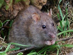 Rodent Infestations And Wild Animal Incidents Are Common In America's Sports Stadiums