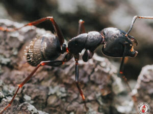 How to Eliminate and Prevent Ant Infestations