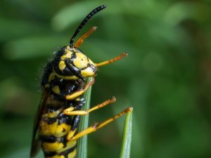 An Upstate Couple Discovered That The Persistent Scratching Sounds Coming From Their Ceiling Were Nesting Yellow Jackets