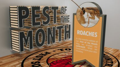 Pest of the Month: Roaches