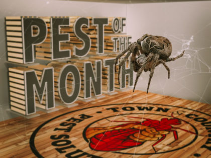 Pest of the Month: Spiders