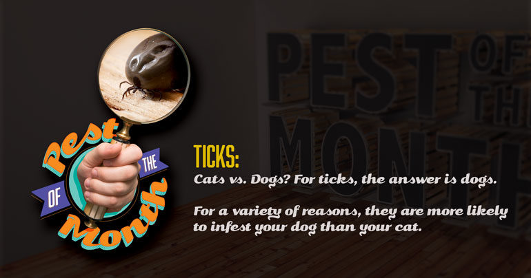 tick, ticks, pest of the month, town and country, town and country pest solutions, pest, pests, rochester, syracuse, buffalo, rochester ny, syracuse ny, buffalo ny, new york, western ny, rochester exterminators, syracuse exterminators, buffalo exterminators, bed bugs, fabry, matt fabry, extermination, hire the pros, friendly, trustworthy