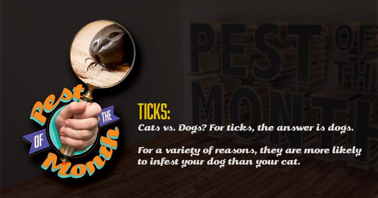 tick, ticks, pest of the month, town and country, town and country pest solutions, pest, pests, rochester, syracuse, buffalo, rochester ny, syracuse ny, buffalo ny, new york, western ny, rochester exterminators, syracuse exterminators, buffalo exterminators, bed bugs, fabry, matt fabry, extermination, hire the pros, friendly, trustworthy