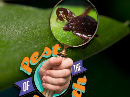Pest of the Month: Ticks