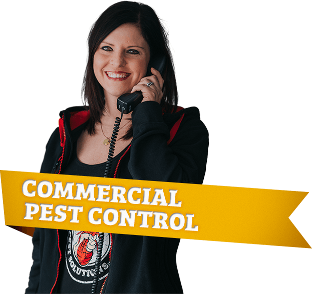 town and country, town and country pest solutions, pest, pests, rochester, syracuse, buffalo, rochester ny, syracuse ny, buffalo ny, new york, western ny, rochester exterminators, syracuse exterminators, buffalo exterminators, bed bugs, fabry, matt fabry, extermination, hire the pros, friendly, trustworthy