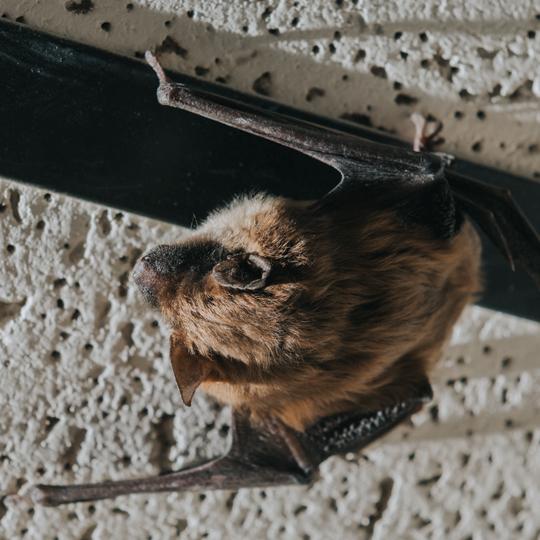 bat service thumbnail