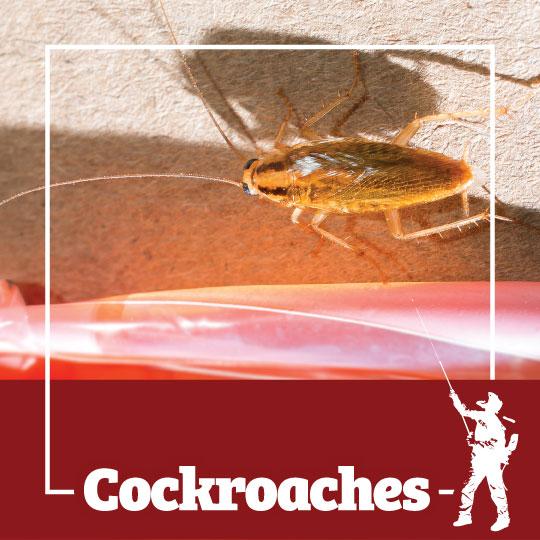 Cockroaches Control Rochester, Syracuse, Buffalo in NY