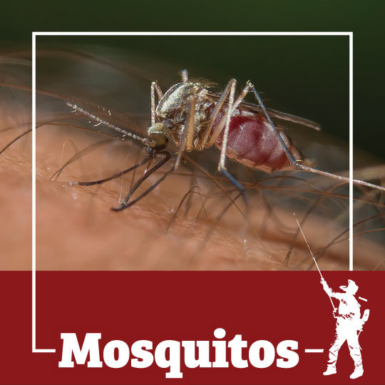 mosquito, mosquitos, mosquitoes, town and country, town and country pest solutions, pest, pests, rochester, syracuse, buffalo, rochester ny, syracuse ny, buffalo ny, new york, western ny, rochester exterminators, syracuse exterminators, buffalo exterminators, bed bugs, fabry, matt fabry, extermination, hire the pros, friendly, trustworthy