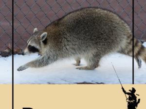 Genius Raccoons Baffle Canadians