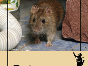 Do All Rat Species In New York Pose A Potential Public Health Issue?