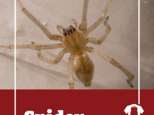 Spider Causes Crash in Upstate New York