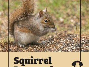 How Squirrels Can Inflict Costly Damages
