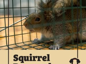 Squirrels Cause New Yorkers To Lose Their Internet Connection, And Police Struggled To Remove A Squirrel From A Brockport Home