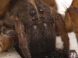 Police Officers Admirably Fulfilled Their Duty To Serve And Protect The Public By Removing A Scary Spider From A New York Woman's Home