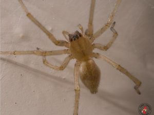 As Seasons Grow Longer, Spiders Are Growing Larger