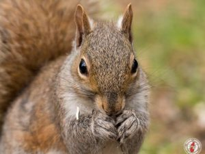 Some Squirrel Species Can Remember The Location Of As Many As 9,000 Nuts