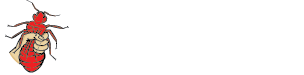 Town & Country Pest Solutions