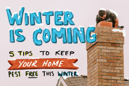 Winter Is Coming: 5 tips to keep your home pest free this winter